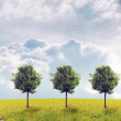 Panorama of green field with a trees - Stock Photo