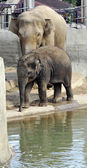 Baby African elephant — Stock Photo