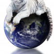White tiger siting on Earth - Stock Photo