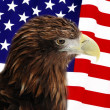 Stock Photo: Bald Eagle in guarding American Flag
