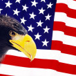 Stock Photo: Bald Eagle in guarding AmericFlag