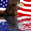 Bald Eagle in guarding AmericFlag — Stock Photo #6968122