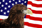 Bald Eagle in guarding American Flag — Stok fotoğraf