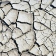 Dry earth background texture - Stock Photo