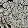 Dry earth background texture — Stock Photo #6989061