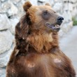 Brown Bear — Stock Photo #6989181
