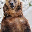 Brown Bear — Stock Photo #6989182