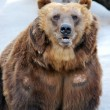 Brown Bear — Stock Photo #6989185