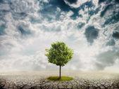 árbol solitario en el desierto — Foto de Stock