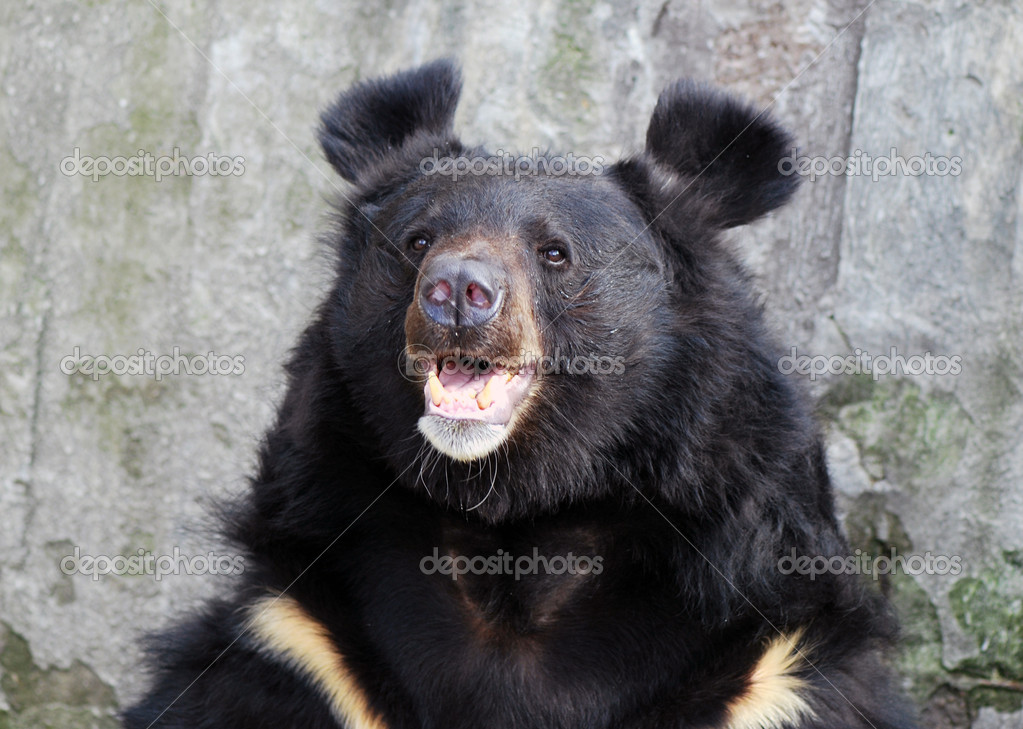 Brown Bear — Stock Photo #6989175