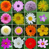 Flowers collection — Stock Photo