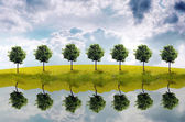 Panorama of green field with a tree — Stock Photo