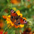 Butterfly — Stock Photo #7044140