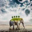 Elephant in the desert - Stock Photo