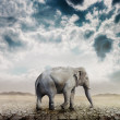 Elephant in the desert — Stock Photo