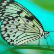 Beautiful exotic butterfly — Stock Photo