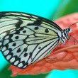 Stock Photo: Beautiful exotic butterfly