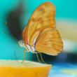 Beautiful exotic butterfly — Stock Photo #7208514