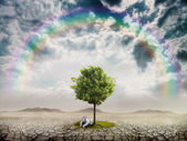 Lonely green tree in the desert — Stock Photo