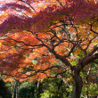 Autumn colors in Kyoto, Japan — Stock Photo