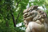 Shi shi köpek kyoto, japonya — Stok fotoğraf