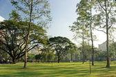 Drzewa w parku — Zdjęcie stockowe