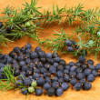 Juniper — Stock Photo