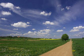 Rural landscape with blue sky — Stock Photo