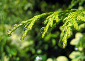 Water drops on the plant — Stock Photo