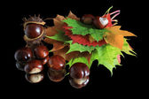 Autumn leaves and chestnuts on black background — Stock Photo
