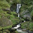 Idyllic Triberg Waterfalls - Stock Photo