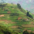 Virunga Mountains in Africa — Stock Photo #7116484