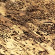 Bark beetle traces - Stockfoto