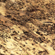Bark beetle traces - Stock Photo