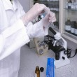 Laboratory - Stock Photo