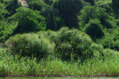 Waterside vegetation — Stock Photo