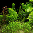 Water plants — Stock Photo