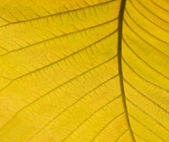 Yellow autumn leaf detail — Stock Photo