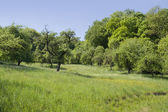 Idyllic spring scenery — Stock Photo