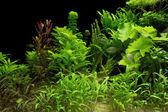 Waterplanten — Stockfoto