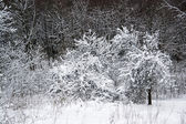 Snowy forest detail — Foto de Stock