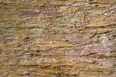 Redwood bark detail — Stock Photo