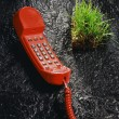 Red phone and grass sode — Stock Photo #7139832