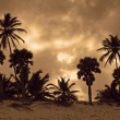 Carribean evening scenery — Stock Photo
