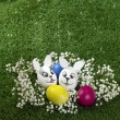 Bunny Easter eggs — Stock Photo