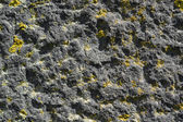 Lichen on rough stone — Stock Photo