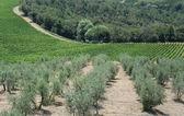 Chianti in Tuscany — Stock Photo