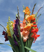 Bunch of gladioli flowers — Stock Photo