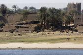 Waterside Nile scenery in Egypt — Stock Photo