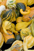 Lots of various curcurbits — Stock Photo